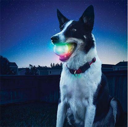 Obrázek Svítící míček pro psy